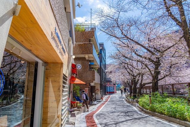 中目黒駅付近の目黒川の桜